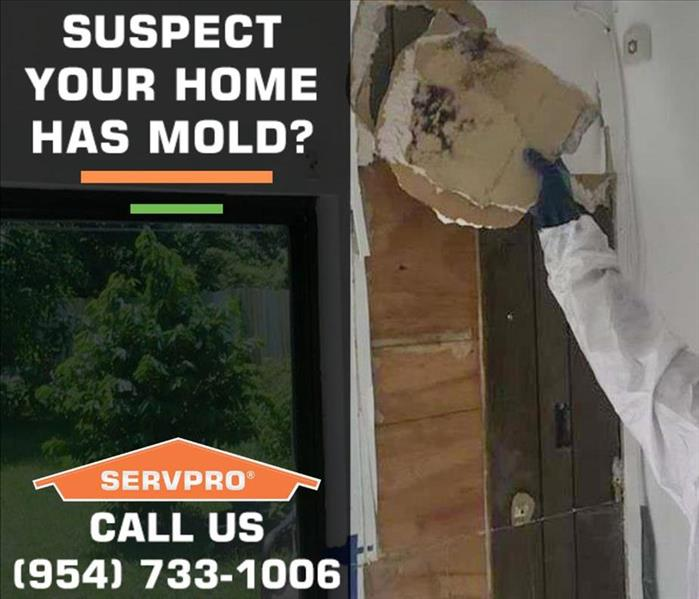 Do You Suspect Your Home Has Mold?