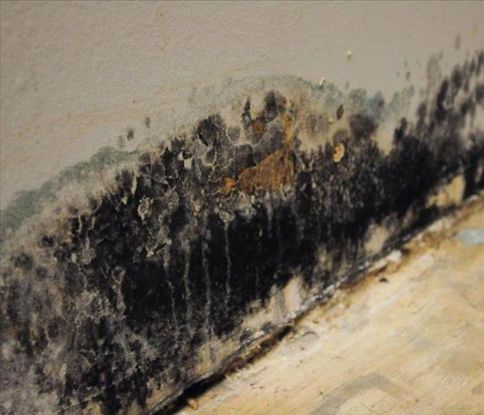 Mold Remediation Using Chemicals on Mold?