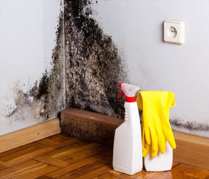 Why SERVPRO Black Mold in your Oakland Park or Sunrise home?